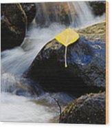 Galena Creek Trail  Wood Print