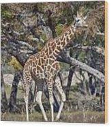 Galloping Giraffe  Wood Print
