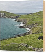 Atlantic Coast Of Ireland Wood Print