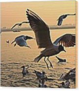 Ganges River Gulls Wood Print