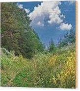 Gap Trail Wood Print