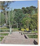 Garden At Montjuic In Barcelona Wood Print
