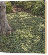Garden Color At Woodward Park 21f Wood Print