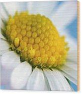Garden Daisy Wood Print by Natalie Kinnear