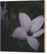 Garden Delight 17 Wood Print