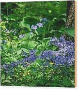 Garden Flox Wood Print