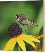 Garden Fly Wood Print