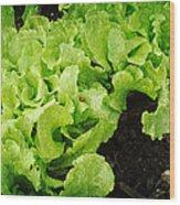 Garden Fresh Baby Lettuce And Lady Bug Wood Print