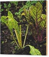 Garden Greens Wood Print