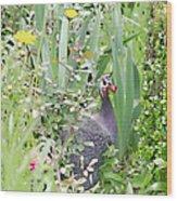 Garden Hen Wood Print
