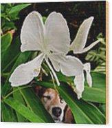Garden Hound Wood Print