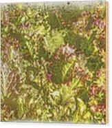 Garden Lettuce - Green Gold Wood Print