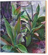 Garden Of Agave Wood Print