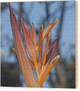 Garden Paradise Wood Print