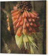 Garden Poker Flower Wood Print