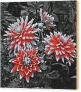 Garden Pom Poms Wood Print
