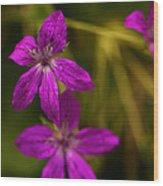 Garden Raindrops Wood Print