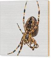 Garden Spider Profile Wood Print
