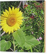 Garden Sunflower Wood Print