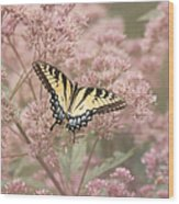 Garden Visitor - Tiger Swallowtail Wood Print