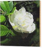 Gardenia 2013 Wood Print