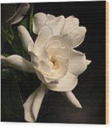 Gardenia Blossom Wood Print