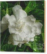 Gardenia In The Rain Wood Print