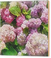 Gardens - Pink And Lavender Hydrangea Wood Print