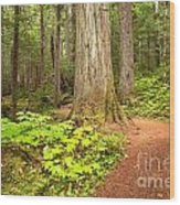 Garibaldi Wilderness Rainforest Wood Print