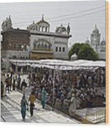Gathering Inside The Golden Temple In Amritsar Wood Print
