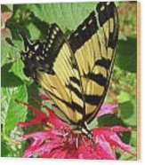 Gathering Nectar Wood Print