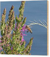 Gathering Pollen 1 Wood Print