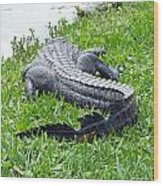 Gator In The Grass Wood Print