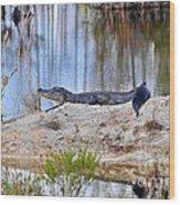 Gator On The Mound Wood Print