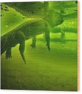 Gator Reflection Wood Print