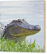Gator Smile Wood Print