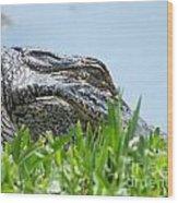 Gator Watching Wood Print