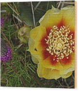 Gattinger's Prairie Clover And Prickly Pear Flower Wood Print