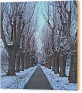 Gauntlet Of Trees To Hohenheim Castle Wood Print