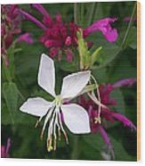 Gaura Lindheimeri Whirling Butterflies With Agastache Ava Wood Print