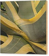 Gave Cactus Wood Print