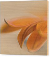 Gazania Abstract II Wood Print
