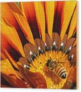 Gazania Pollination Wood Print