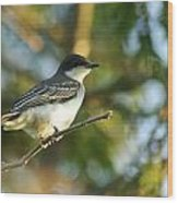 Gazing Eastern Kingbird  Wood Print