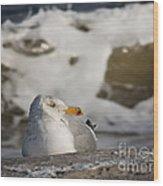 Gazing Gull Wood Print