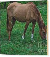 Gazing Horse Wood Print