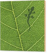 Gecko Wood Print by Aged Pixel