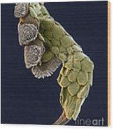 Gecko Foot Sem Wood Print