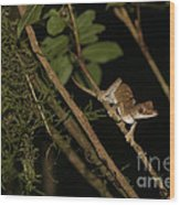 Gecko In The Night Wood Print