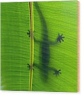 Gecko Silhouette Wood Print